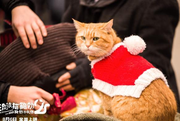 《【恒耀平台会员佣金】《流浪猫鲍勃2:鲍勃的礼物》定档8月6日 鲍勃猫延续最后的温暖》
